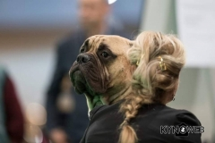 Dogshow M3